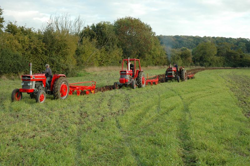 7 Three MF tractors and ploughs working together