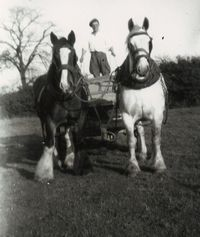 Ron Creasey leading muck in a wagon