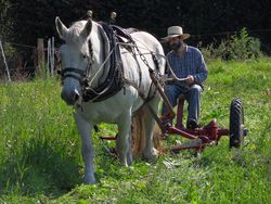 William Castle and Percheron mare on his smallholding