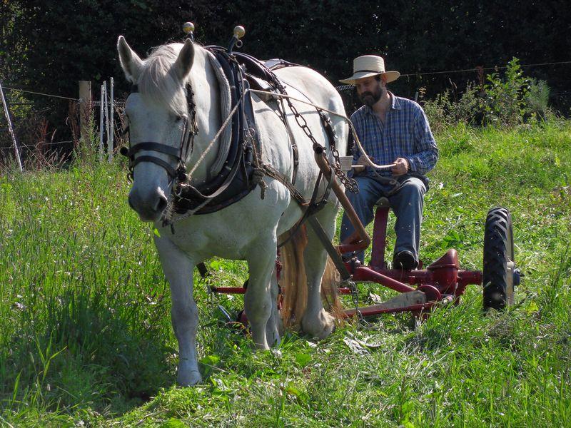 William Castle and Percheron mare on his smallholding