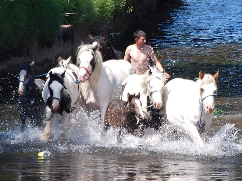 Absolutely Appleby horses in the river Eden