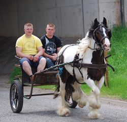 Absolutely Appleby trotting cart