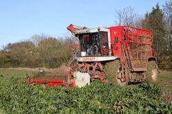 Vervaet Beeteater 617 harvesting sugar beet