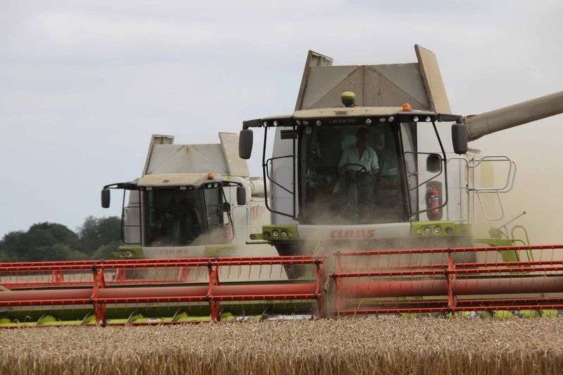 Claas Lexion 760 and 570+ combining wheat