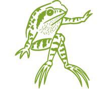 Old Pond frog alone