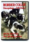 Border_collie_sheepdogs_off_duty