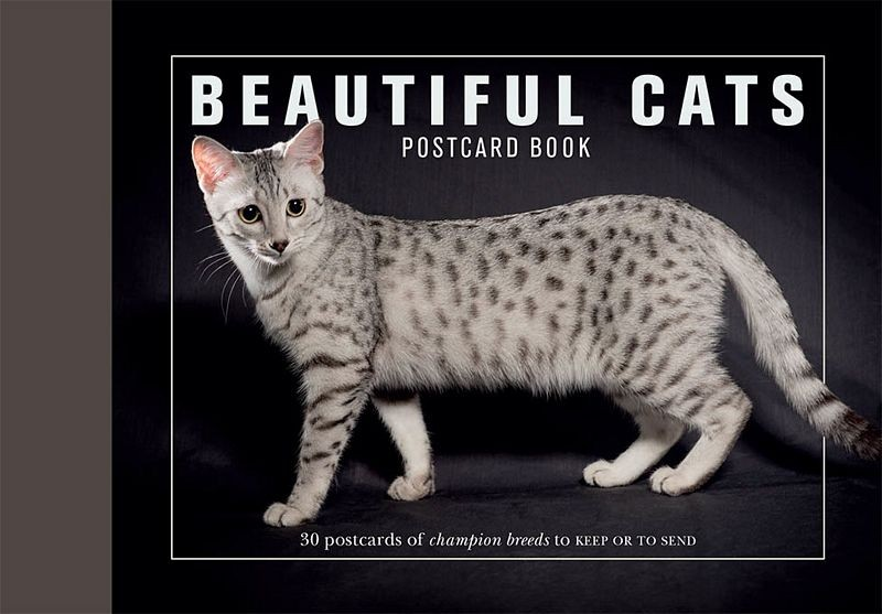 Xl-beautiful-cats-postcard-book-1-i-pobc_postcatscvr-976x976